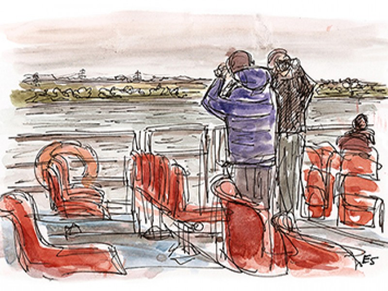 Birdwatching on the Forth from the Maid of the Forth.  The Edinburgh Sketcher  <a href='http://edinburghsketcher.com/' target='_blank'>(Credit)</a>